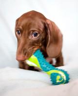 pets-at-play-0311-12997964_30680485.jpg
