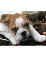 pets-at-play-0311-13005062_30561088.jpg