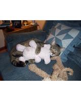 pets-at-play-0311-13011448_28427940.jpg