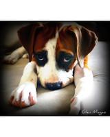 pets-at-play-0311-13021296_30724096.jpg
