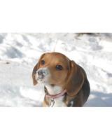pets-at-play-0311-13055351_30760450.jpg