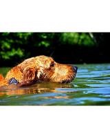 pets-at-play-0311-13077519_11987239.jpg