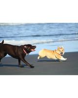 pets-at-play-0311-13082037_29674369.jpg