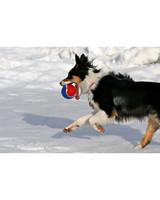 pets-at-play-0311-13117219_30849645.jpg