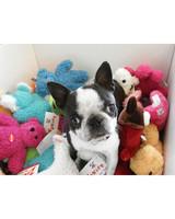 pets-at-play-0311-13132365_30901320.jpg