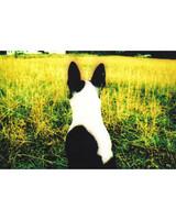pets-at-play-0311-13143052_19162874.jpg