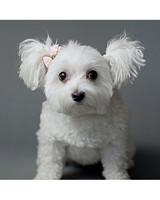 pets-at-play-0311-13144286_30924775.jpg