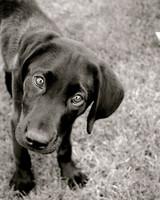 pets-at-play-0311-13154615_30940318.jpg