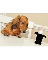 pets-at-play-0311-13157953_25155303.jpg