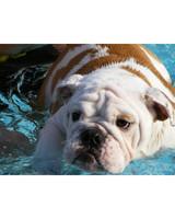 pets-at-play-0311-13158273_13584445.jpg