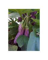 ugc_garden_0310_5435576_10967377_ap.jpg
