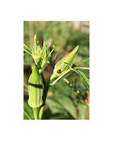 ugc_garden_0310_7489577_19683146_ap.jpg