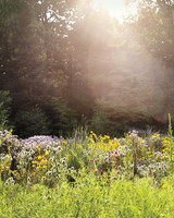 nybg-native-plant-meadow-211-d111464.jpg