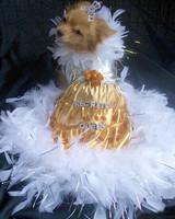 pets_fashion_7468395_122717_19632038.jpg