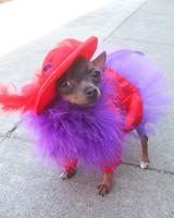 pets_fashion_7658843_122717_13597355.jpg