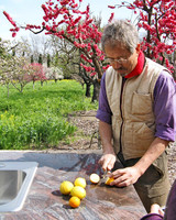 radio_0409_napa_peter_slicing_citrus.jpg