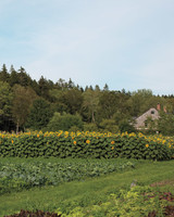 four-seasons-farm-sunflowers-md107849.jpg