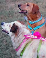 mspets-fallugc-dogtipper-03-mrkt-0814.jpg