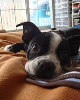 pets_adoption_6366745_122717_14054872.jpg