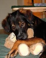 pets_adoption_6706670_122717_16663456.jpg
