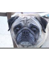 pets_adoption_6944743_122717_13972477.jpg