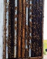 beekeeping-lessons-waxing-kara-01-0723.jpg