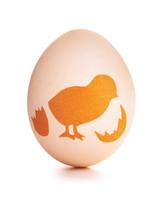 egg-dyeing-app-d107182-paper-chick0414.jpg