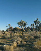 joshua-tree-national-park-4463-mls1939.jpg