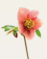 pink-flower-goodthings-ml203cvr1x-0115.jpg