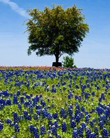 bluebonnet trail in Ennis, Texas