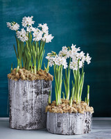 paper-whites-birch-planters-023-d111854.jpg