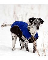 pets_snowangels_7058517_122717_18788878.jpg