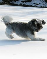 pets_snowangels_7067948_122717_18911362.jpg