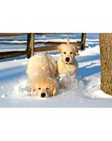 pets_snowangels_7083427_122717_11947159.jpg