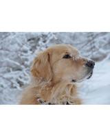 pets_snowangels_7200623_122717_19061142.jpg