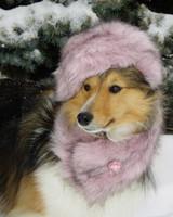 pets_snowangels_7253724_122717_19152307.jpg