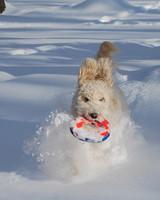 pets_snowangels_7253855_122717_12006793.jpg