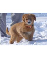 pets_snowangels_7265963_122717_19173953.jpg