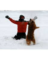 pets_snowangels_7267596_122717_19175764.jpg