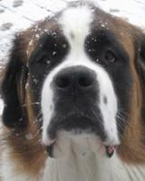 pets_snowangels_7268086_122717_19176376.jpg