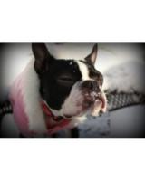 pets_snowangels_7268936_122717_11962483.jpg