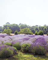lavender-gherman-blueskye-15-edit-d110407.jpg