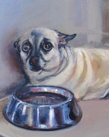 pets_file_010_french_bull_dog_mix_8x10_ac.jpg