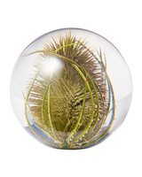 teasel plant glass paperweight