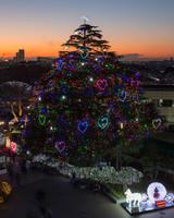 Christmas Tree at Nakayama Racecourse 2015
