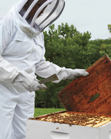 hive-maintenance-2-ms-column-0514-mld106618.jpg