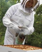 hive-maintenance-3-ms-column-0605-mld106618.jpg