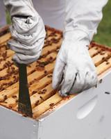 hive-maintenance-4-ms-column-0634-mld106618.jpg