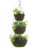 msl-good-things-hanging-herbs-021-mld109975.jpg