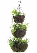 msl-good-things-hanging-herbs-021-mld109975_vert.jpg (skyword:289431)